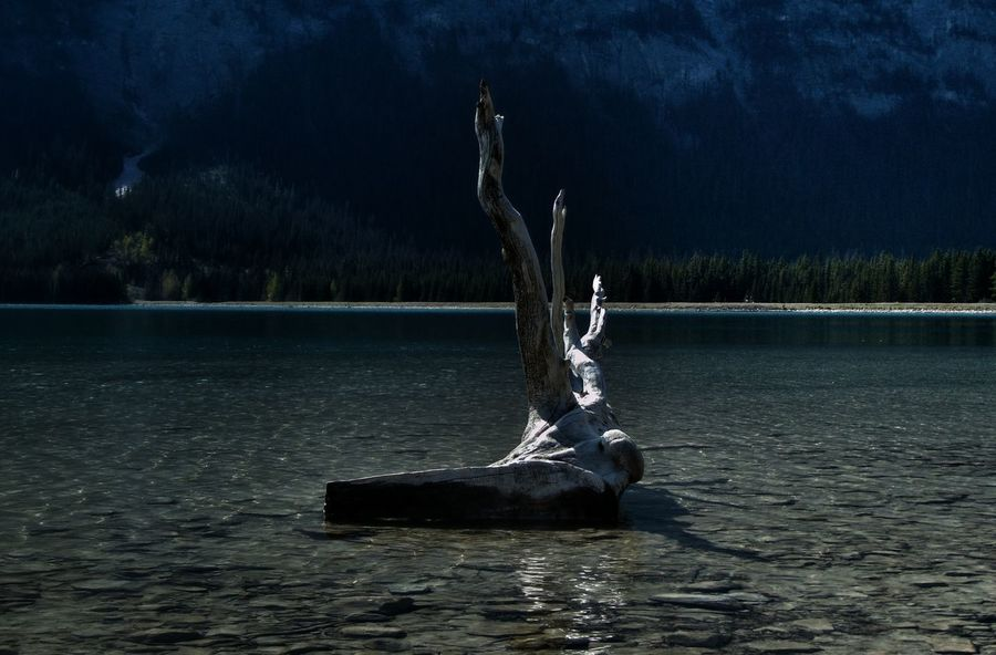 love drift wood...I'd take this home if I could lol Art Beauty Beauty In Nature Crystal Clear Waters Drift Wood  EyeEm Nature Lover Focus On Foreground Log Mountain Lake Nature Shadows & Lights The Great Outdoors With Adobe Mountain Addict Tranquil Scene Waterfront The Great Outdoors - 2016 EyeEm Awards