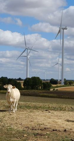 Wind Turbine Electricity Pylon Technology Rural Scene Wind Power Fuel And Power Generation Tree Electricity  Sky Grass