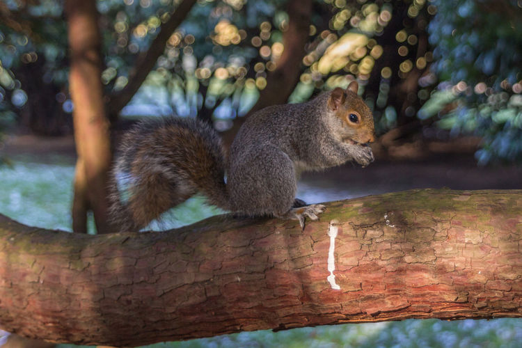 Animal Animal Themes Animal Wildlife Mammal Tree Squirrel Animals In The Wild One Animal Rodent Focus On Foreground Vertebrate Branch No People Nature Day Plant Wood - Material Outdoors Side View Close-up Whisker