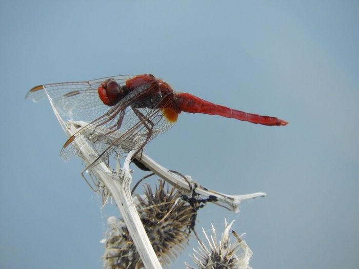 Low angle view of dragonfly on plant against clear sky