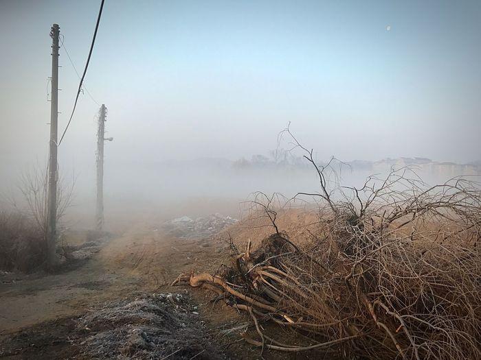 EyeEmNewHere Welcomeweekly Welcom Weekly Morning Nature Landscape Fog