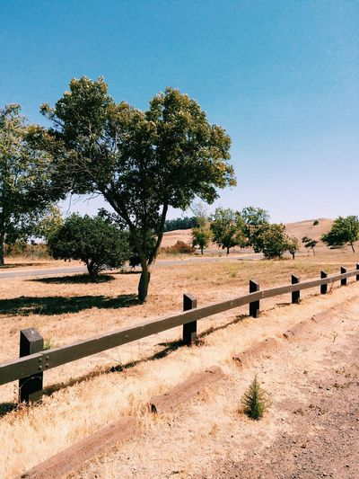 Trees and fence in arid area