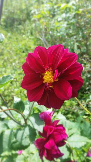 Redflower🌺 LoveFlower🌺 Plants 🌱 Plantphotography EyeEm Nature Lover Beauty In Nature Eyemphotography