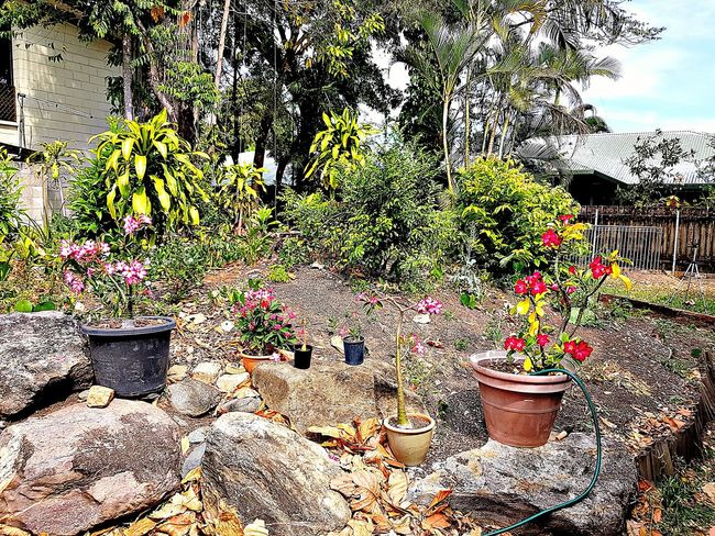 Multi coloured garden Sunny Day mans garden pride Day Outdoors No People Plant Growth Nature Grass Petal Flower Flower Head Sunlight Freshness Artists Life Growth Lifestyles Creative Photography Beautiful Day