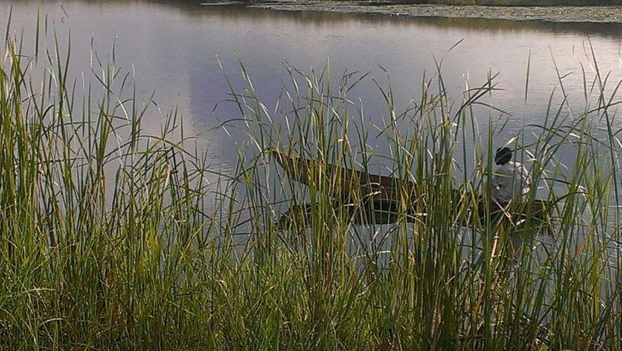 RePicture Travel Lake Kyoga Uganda  White Nile