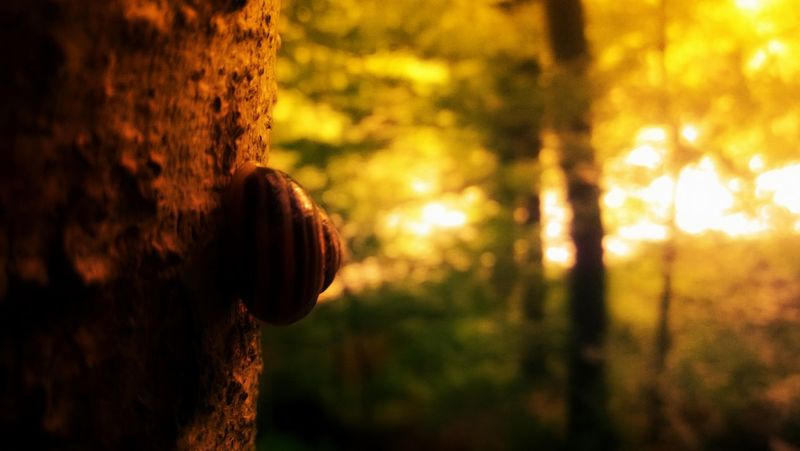 Snail on tree, sun shining through branches Autumn Colors Bark Snail Beauty In Nature Close-up Focus On Foreground Nature Outdoors Snail🐌 Sun Sunlight Tree Tree Trunk