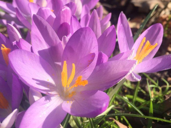 Cheltenham Flowering Plant Flower Plant Petal Beauty In Nature Freshness Vulnerability