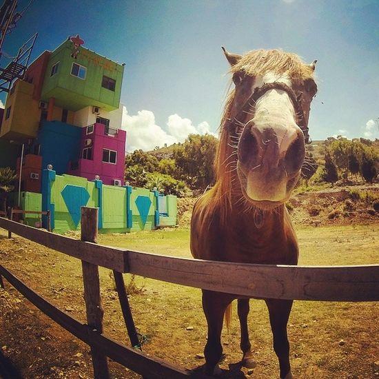 Sweet Horse Lebanon Insta_lebanon Instamood insta_daily bestoftheday wearelebanon prolebanon fun statigram cheval driftghostS webstagram