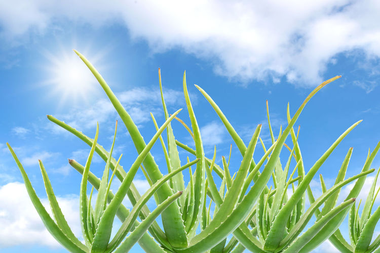 Low angle view of grass against sky