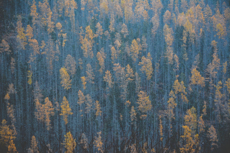 pine forest close-up Autumn Grainy Images Green Color Winter Autumn Backgrounds Beauty In Nature Blue Close-up Colorful Forest Forest Photography High Angle View Landscape Mood Nature No People Pine Tree Pine Wood Pine Woodland Texture Variety Wild WoodLand Yellow