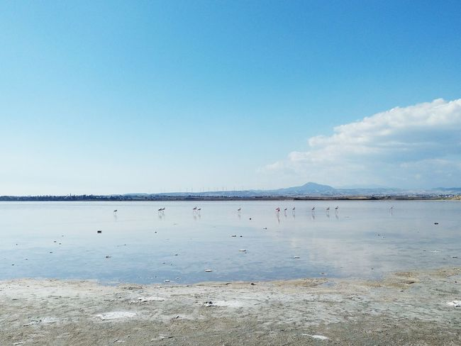 Beach Sea Tranquility Water Sunny Outdoors Day Blue Sky No People Nature Beauty In Nature Scenics Flamingo Flamingos Cyprus Salt Lake Larnaca Blue Sky Blue Sky And Clouds Water Reflections