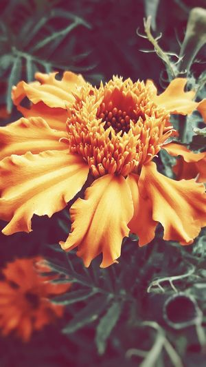 The First Picture Of Flowers Rate Me hope you like my picture and please rate :)