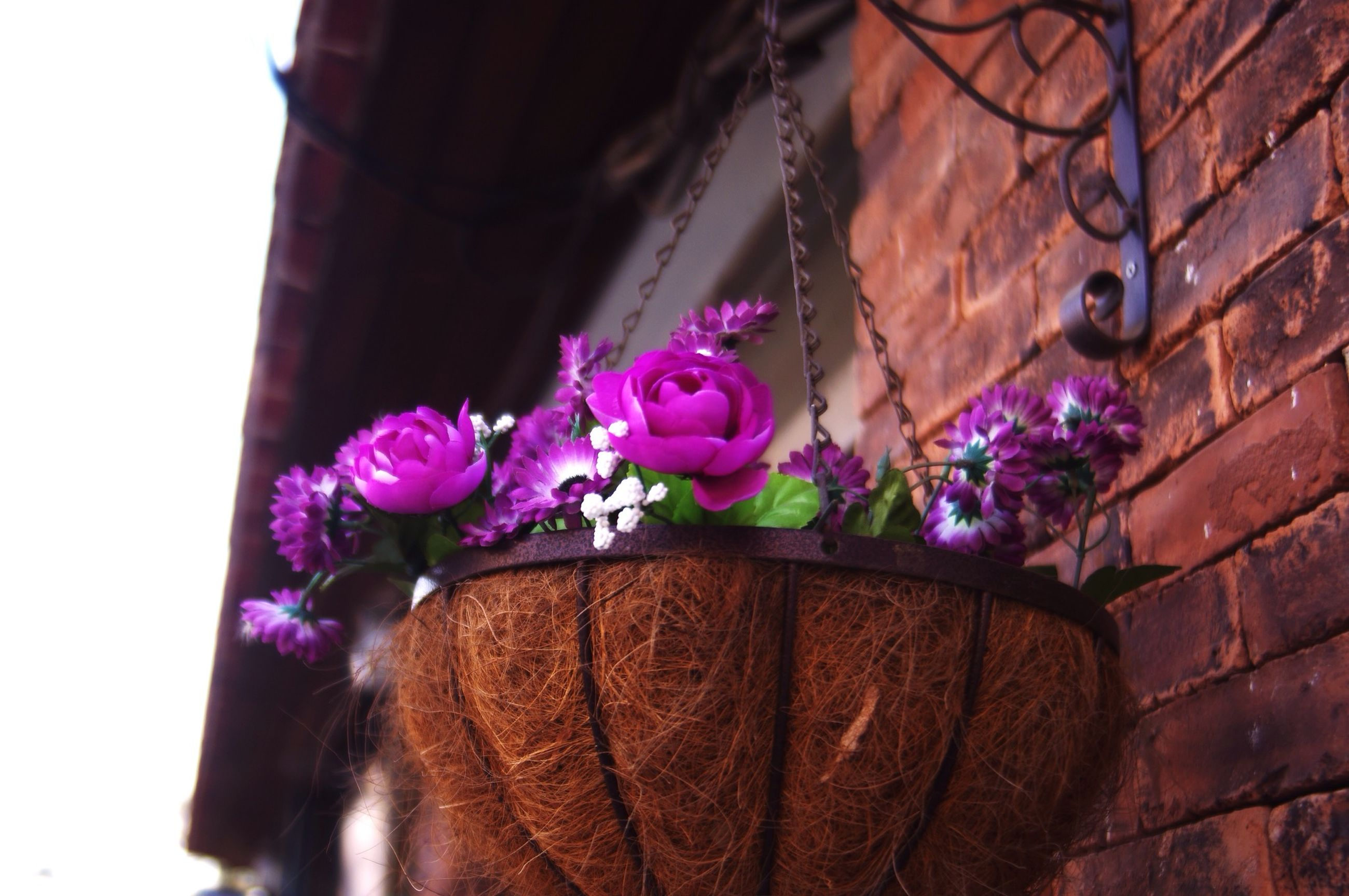flower, fragility, petal, pink color, freshness, decoration, close-up, purple, flower head, wall - building feature, growth, built structure, art, art and craft, multi colored, creativity, low angle view, plant, blooming, architecture