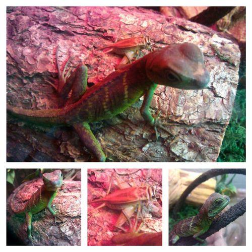 Reptile Lizard Love Mylizard Taking Photos