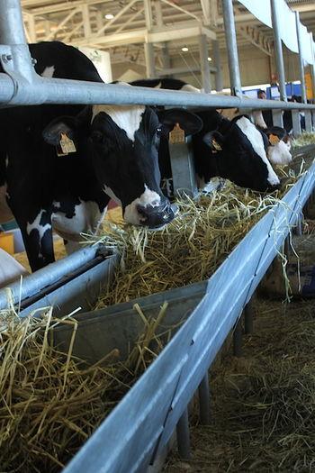 newsageagro.com - Latte Foraggio Vacche Cremona