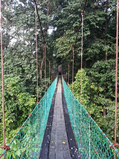 The Maliau Sky Walk or Canopy Walk at Maliau Basin Conservation in Sabah Borneo Outdoors Photography
