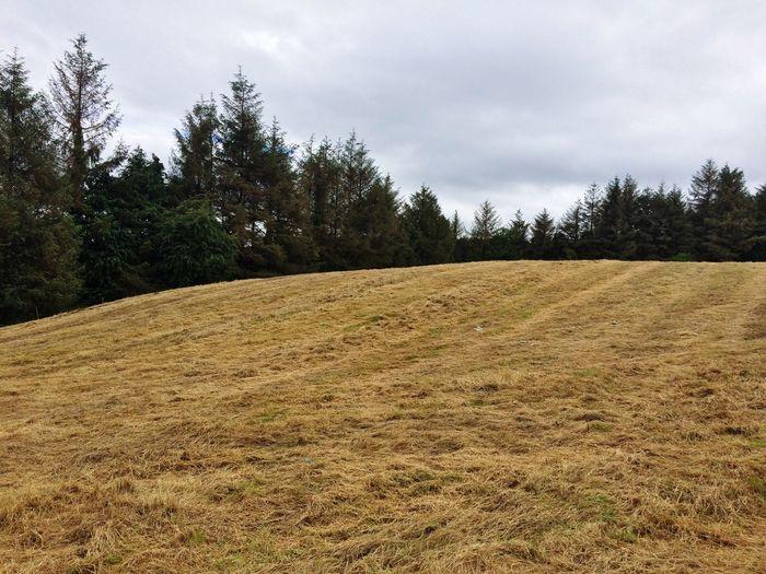 A field in Nadd, County Cork, Ireland First Eyeem Photo County Cork Rural Silage Conifers
