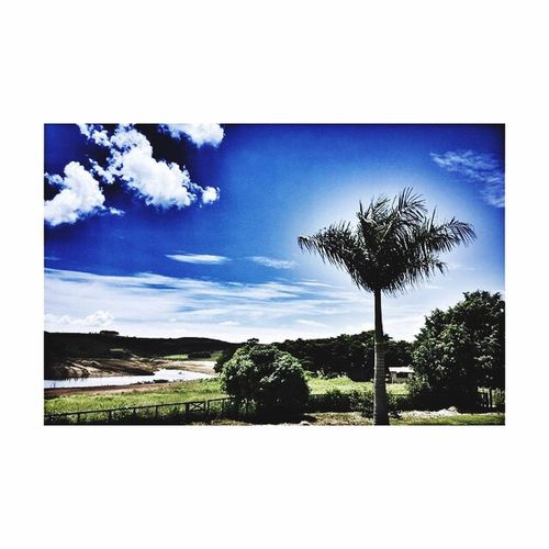 Tree Nature Sky Landscape Tranquil Scene Blue Cloud - Sky No People Tranquility Scenics Palm Tree Beauty In Nature Day Outdoors Growth Single Tree foto by Rosana Nascimento📷®