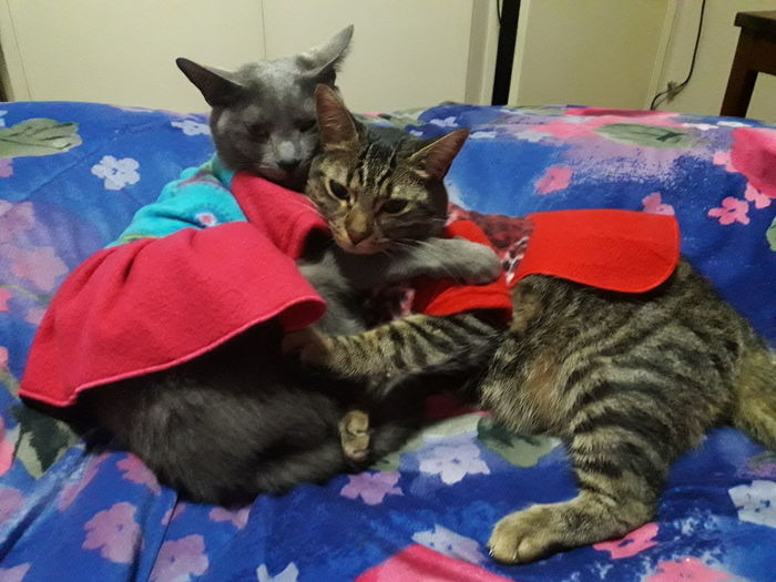 Domestic Cat Domestic Animals Feline Gatitos Gatos Gato😽 Gatitas🐱💕 Cat Lovers Gatitas Gatitoslindos EyeEm Selects Gatos 😍 Gatita❤ Cats Cat Cats 🐱 Gatita  Cat♡ Gatita