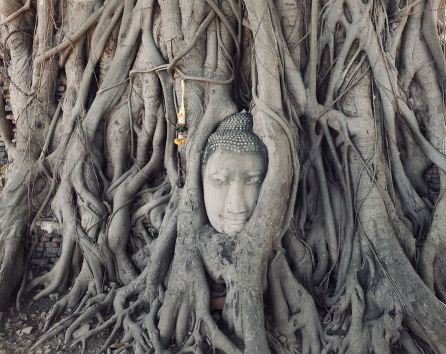 Buddha sculpture amidst tree trunk