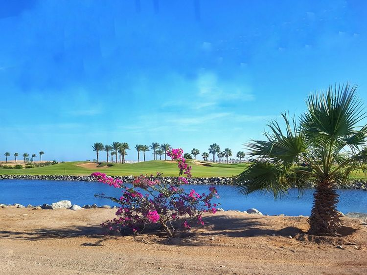 Sky Outdoors Tree Beach Day Cloud - Sky Blue Sand Nature Beauty In Nature Water No People Flowering Bush Palm Tree Golf Greens Wassergraben Golfplatz In Der Wüste Golf Course Golf Green In The Desert Golf Club Golf Green - Golf Course Green Grass And Water Green Grass Blue Sky Summer Views Perspectives On Nature Growth Flower Tranquility Tranquil Scene EyeEm Ready