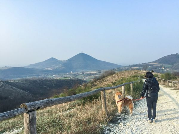 Pets Dog Mountain Walking Hiking Leisure Activity Nature Clear Sky Scenics Beauty In Nature Outdoors Wander Wanderlust Wanderlust Nature Explore Lost In The Landscape