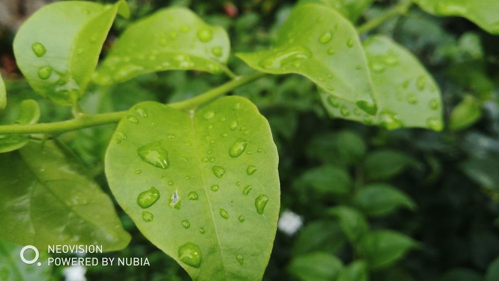 Water Leaf Drop Close-up Plant Green Color RainDrop Monsoon Rainy Season Leaf Vein Water Plant Butterfly - Insect