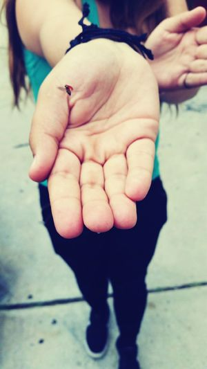 Mr Bug Ladybug