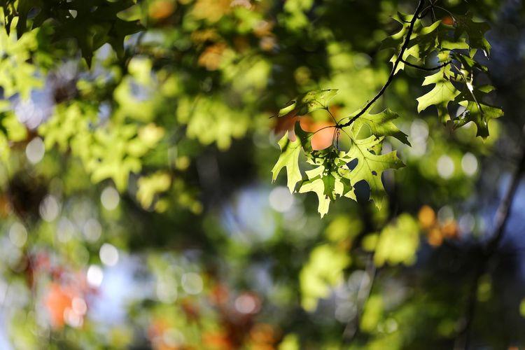 진한 가을빛 . . #하루한컷 #하늘공원 #단풍 #가을 #5DMARK4 #새아빠백통 #EF70200F28LIIISUSM Tree Plant Part Branch Leaf Outdoor Pursuit Healthy Lifestyle Multi Colored Vine - Plant Summer Close-up