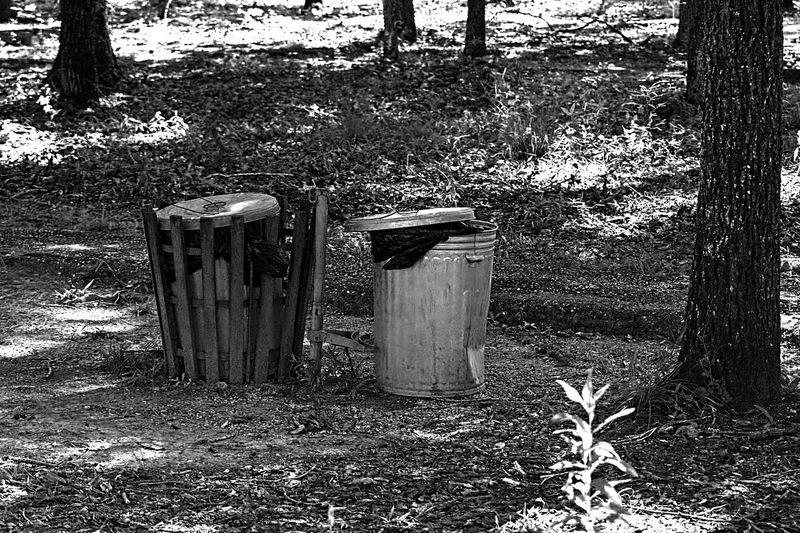 Graffiti on old tree trunks in field