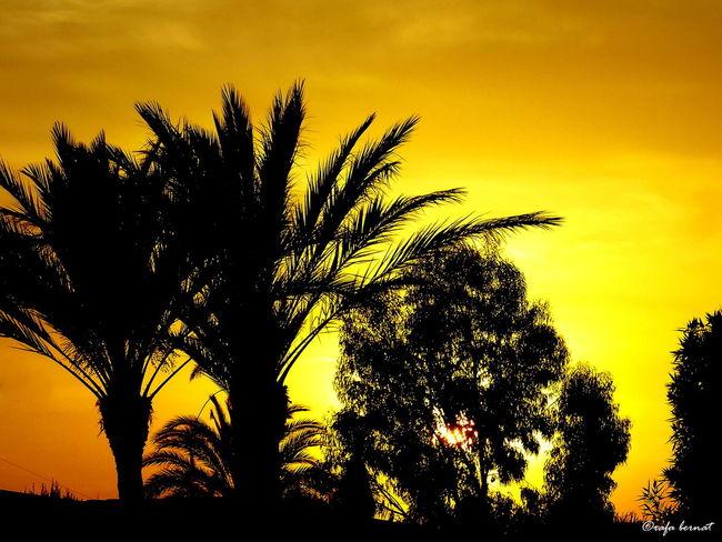Atardecer en Muchavista, El Campello. EyeEm Nature Lover EyeEm Best Shots Landscape Discover Your City