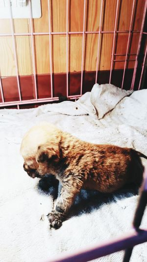 new life Puppy Newborn Dog Breathe Newlife Gavebirth Born EyeEm Selects Pets Dog Relaxation Feline Close-up Pet Bed At Home