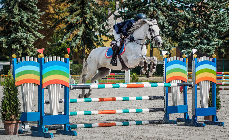 Animal Themes Challange Competition Domestic Animals Fast Shutter Speed Freeze The Moment Horse Multi Colored Outdoors Show Jumping Sport
