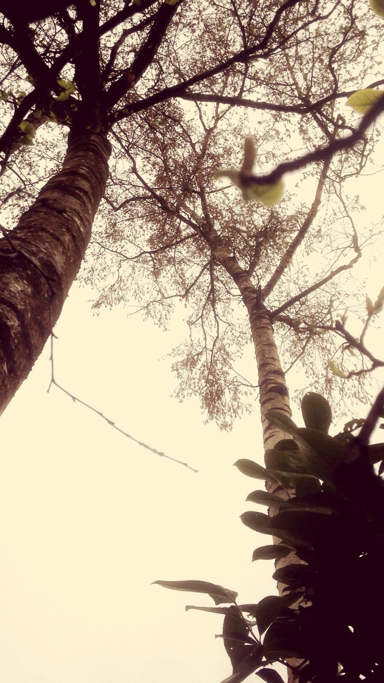 low angle view, tree, branch, nature, growth, sky, no people, outdoors, beauty in nature, day, close-up