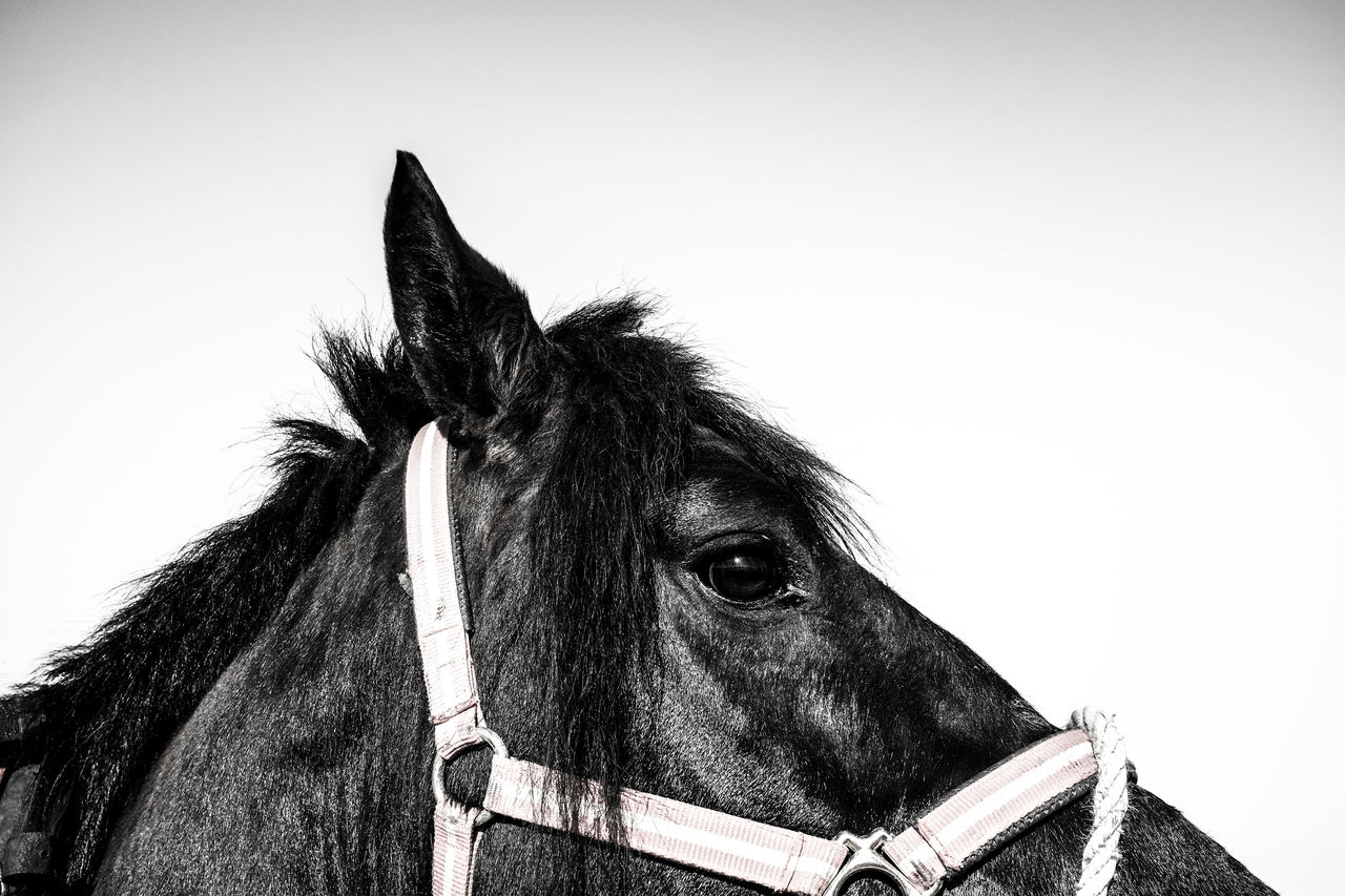 Cropped View Of Horse