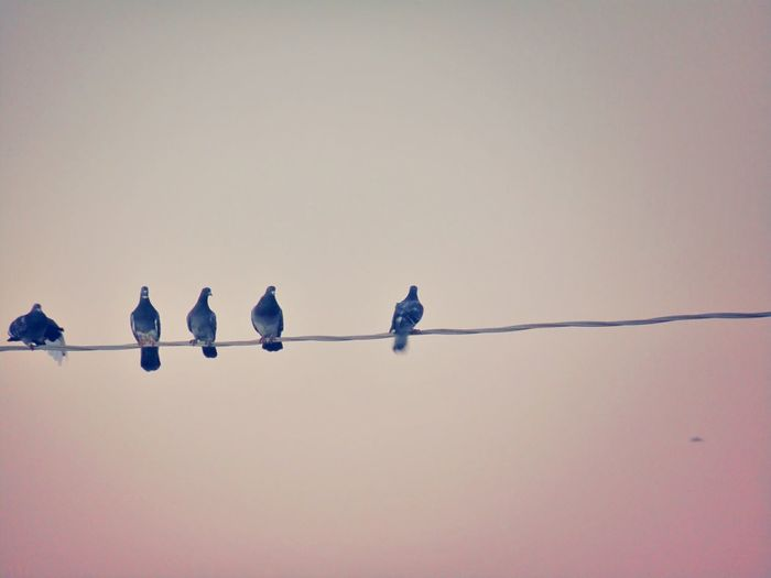Birds perching on cable