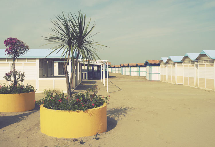 beach huts, Lido di Venezia, Italy Lido Di Venezia Venice Lido Beach Beach Cabins Beach Huts Built Structure Italy No People Outdoors Plant Resort Retro Styled Sand Seaside Vacation Vintage