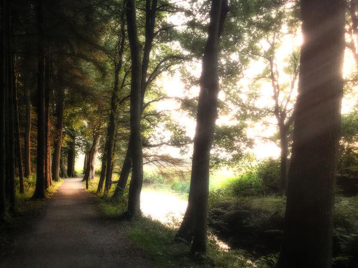 Narrow walkway along trees