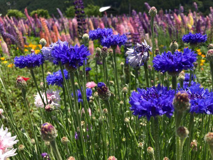 💠🌼 Buatiful Flower Beauty In Nature