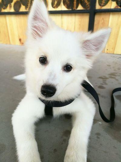 Dog❤ Dog Pets One Animal Mydog Lovemelovemydog