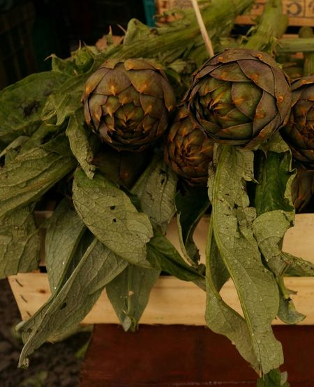 Fresh artichoke. Close-up Nature Vegetables & Fruits Vegetables Veggies Fresh Fresh Produce Travel Traveling Travel Photography Market Marketplace