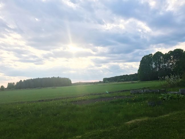 Landscape Field Nature Grass Beauty In Nature Tranquil Scene Sky Tranquility Scenics Agriculture No People Tree Growth Day Outdoors Rural Scene