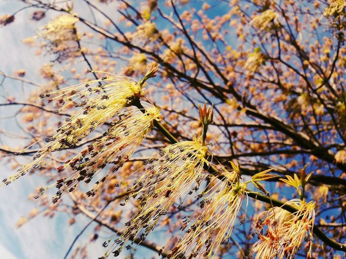 Welcome Spring! 🌲🌱🌳🌴🌷🌸🌹🍀🌺🌻🌼🌈🌝 Spring Hanging Out Taking Photos Check This Out Hello World Relaxing Hi! Enjoying Life Beautiful Green Happiness Spring Flowers Spring Is Coming  Spring 2016 Spring Colours