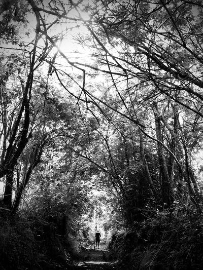 People walking on footpath in forest