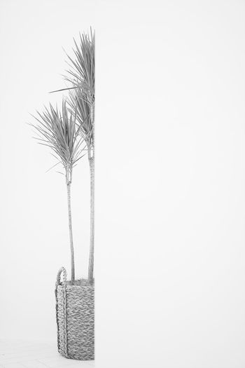LoneRanger Basket No People Studio Shot Indoors  White Background Close-up Day Art SonyA7s Plants