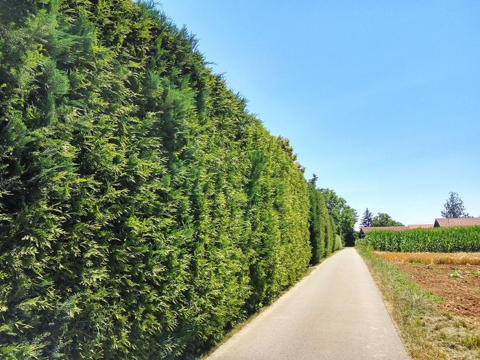 Green Fence Road Farmlandscape Countryside Green Fence High Fence Natural Fence Tree Agriculture Sky Green Color Vineyard Plantation Farmland Agricultural Field Empty Road White Line Cultivated Land