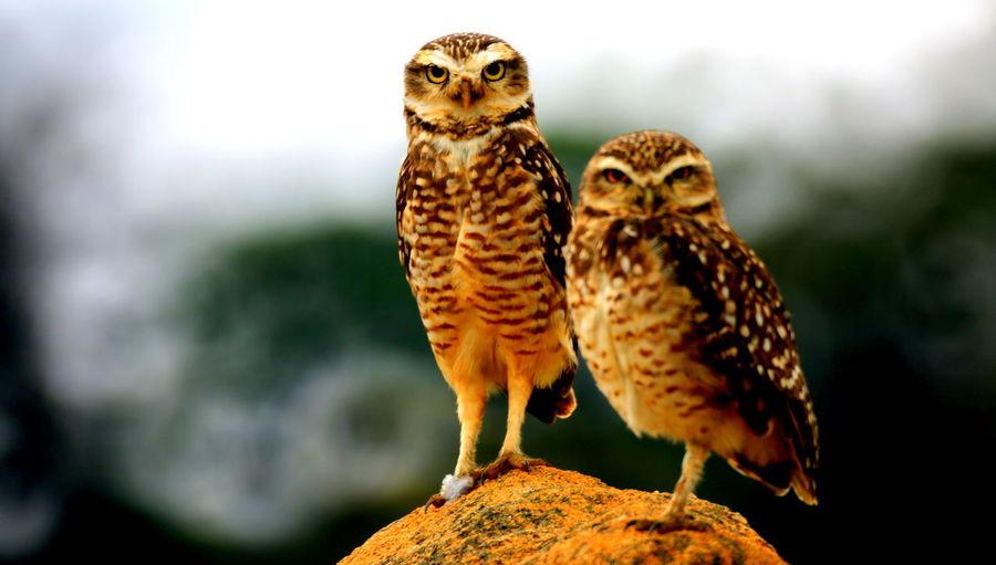 Close-up of a owl