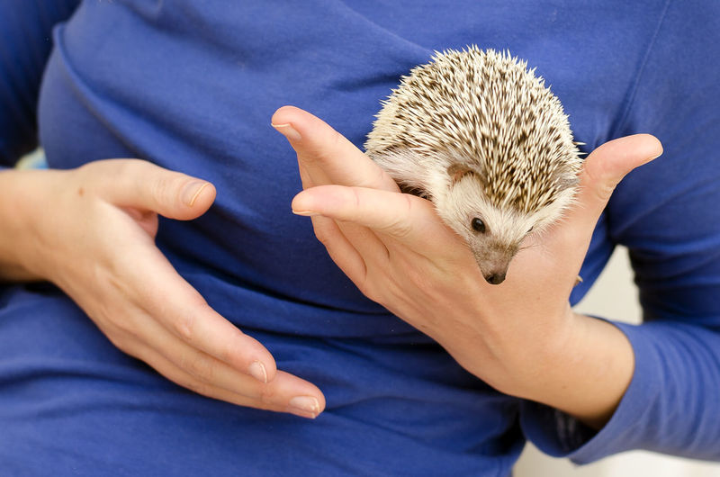 beast One Animal Mammal Midsection One Person Hedgehog Holding Human Hand Vertebrate Hand Real People Animal Wildlife Pets Domestic Casual Clothing Rodent Domestic Animals Close-up Care Pet Owner