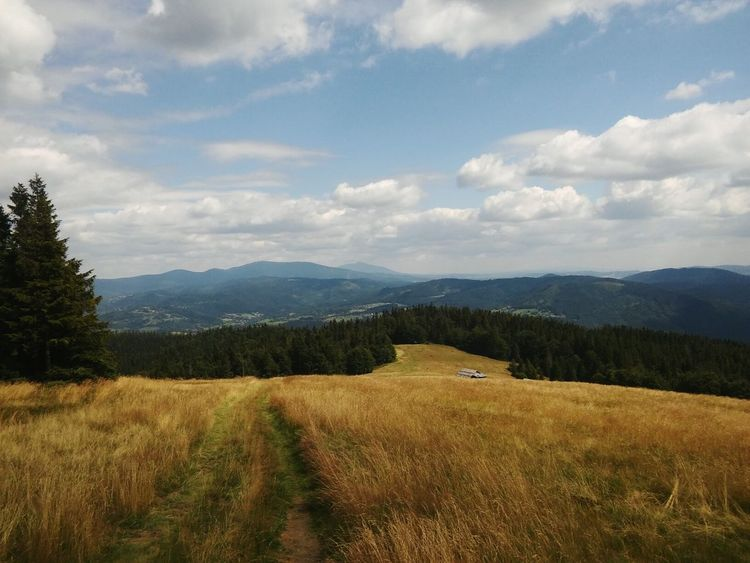 First Eyeem Photo Beskidy Mountain Beskid Zywiecki Poland Polska Śląsk Sky And Clouds Sky Las Trees Wood Landscape Nature