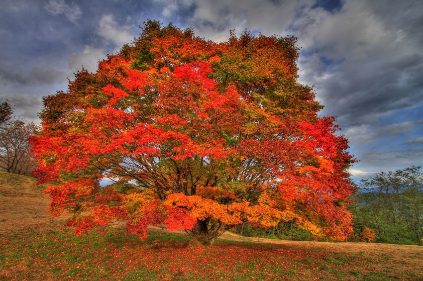 Japan Nagano Ikeda Photography Nature Mountains Autumn Leaves HDR Hdr_Collection